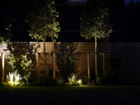 Berkhamsted - Contemporary Garden - Planting by Night
